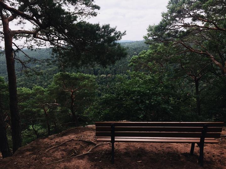 Blick auf den Pfälzer Wald